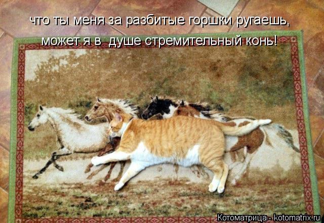 Котоматрица: что ты меня за разбитые горшки ругаешь, может я в  душе стремительный конь! может я в  душе стремительный конь!