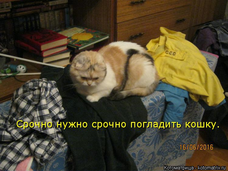 Котоматрица: Срочно нужно срочно погладить кошку.