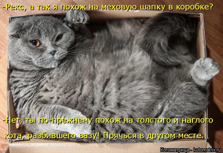 Котоматрица: кота, разбившего вазу! Прячься в другом месте. -Рекс, а так я похож на меховую шапку в коробке? -Нет, ты по-прежнему похож на толстого и наглого
