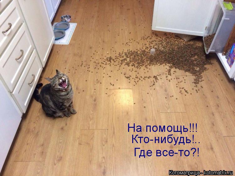 Котоматрица: На помощь!!! Кто-нибудь!.. Где все-то?!