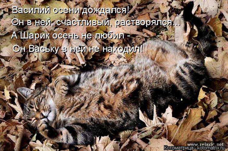 Котоматрица: Василий осени дождался! Он в ней, счастливый, растворялся... А Шарик осень не любил -  Он Ваську в ней не находил!