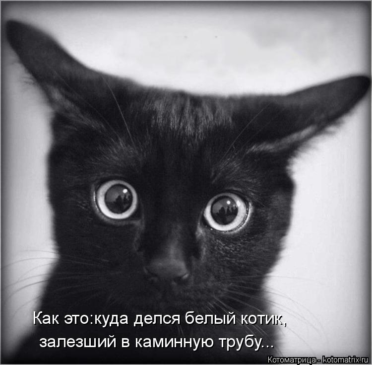 Котоматрица: Как это:куда делся белый котик, залезший в каминную трубу...