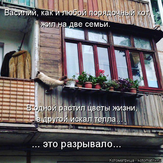 Котоматрица: Василий, как и любой порядочный кот,  жил на две семьи. В одной растил цветы жизни, в другой искал тепла... ... это разрывало...