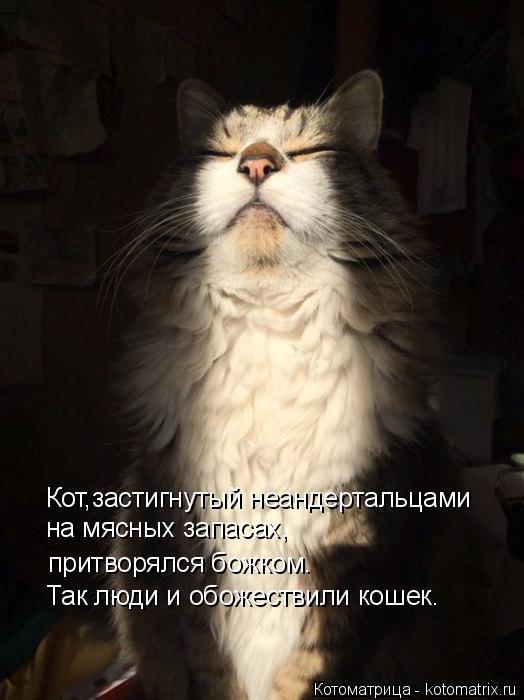 Котоматрица: Кот,застигнутый неандертальцами на мясных запасах, притворялся божком. Так люди и обожествили кошек.