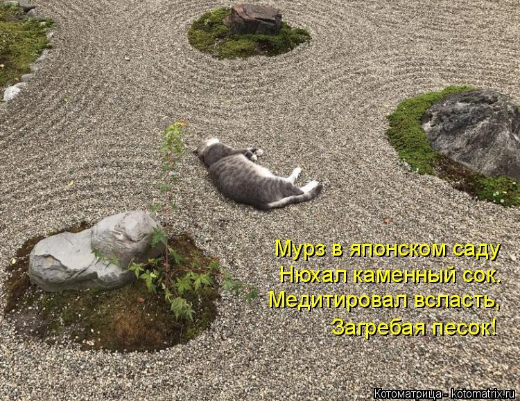 Котоматрица: Мурз в японском саду Нюхал каменный сок. Медитировал всласть, Загребая песок!