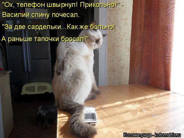 """Котоматрица: """"Ох, телефон швырнул! Прикольно!"""" - Василий спину почесал. """"За две сардельки...Как же больно! А раньше тапочки бросал!"""""""