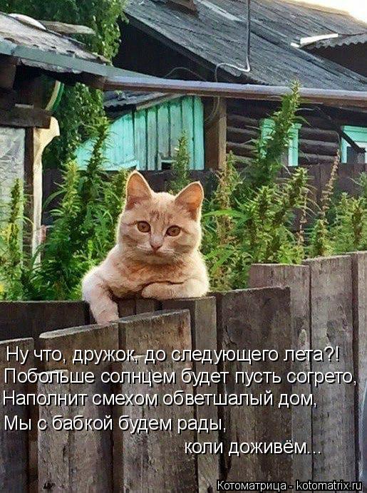 Котоматрица: Ну что, дружок, до следующего лета?! Побольше солнцем будет пусть согрето, Наполнит смехом обветшалый дом, Мы с бабкой будем рады,  коли дожив