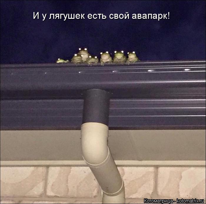 Котоматрица: И у лягушек есть свой авапарк!