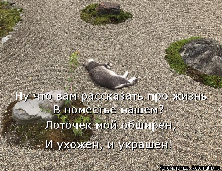 Котоматрица: Ну что вам рассказать про жизнь  В поместье нашем? Лоточек мой обширен,  И ухожен, и украшен!
