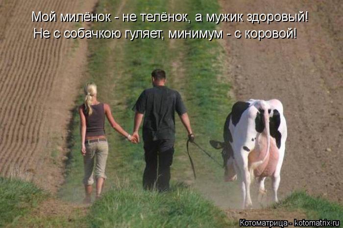 Котоматрица: Мой милёнок - не телёнок, а мужик здоровый! Не с собачкою гуляет, минимум - с коровой!