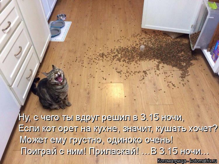 Котоматрица: Ну, с чего ты вдруг решил в 3.15 ночи, Если кот орет на кухне, значит, кушать хочет? Может ему грустно, одиноко очень! Поиграй с ним! Приласкай! …