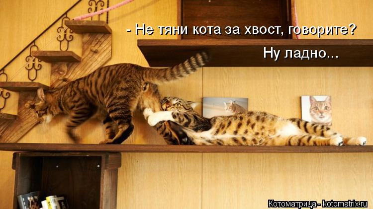Котоматрица: - Не тяни кота за хвост, говорите? Ну ладно...