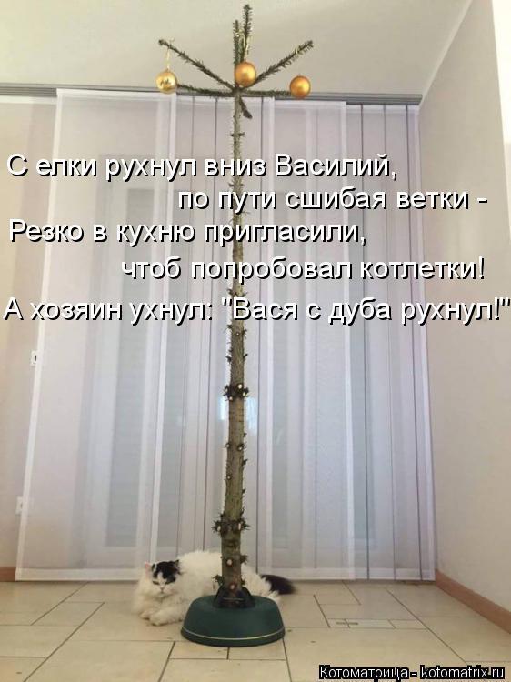 """Котоматрица: С елки рухнул вниз Василий, по пути сшибая ветки - Резко в кухню пригласили, чтоб попробовал котлетки! А хозяин ухнул: """"Вася с дуба рухнул!"""""""