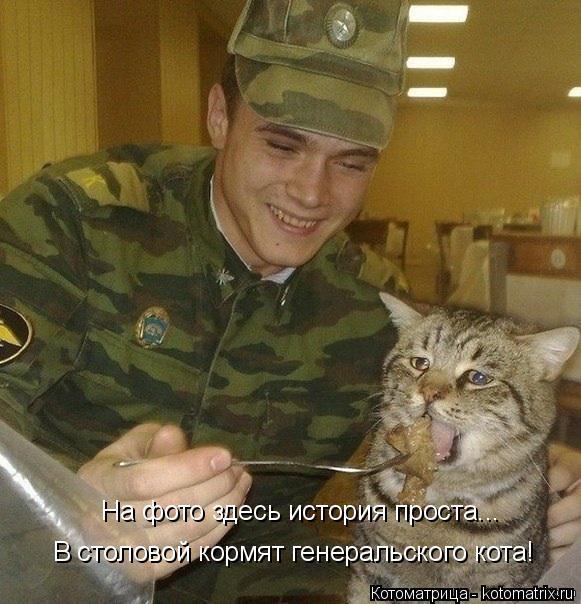 Котоматрица: В столовой кормят генеральского кота! На фото здесь история проста...
