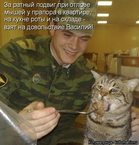 Котоматрица: За ратный подвиг при отлове мышей у прапора в квартире, на кухне роты и на складе - взят на довольствие Василий!