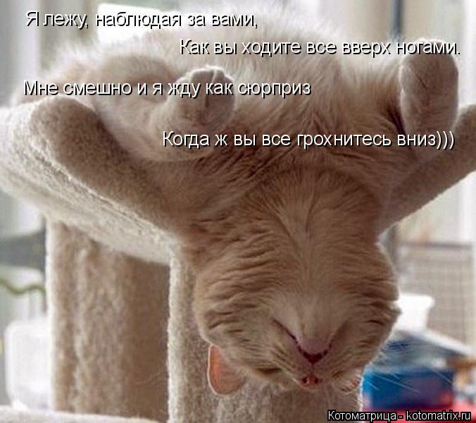 Котоматрица: Как вы ходите все вверх ногами. Я лежу, наблюдая за вами, Мне смешно и я жду как сюрприз Когда ж вы все грохнитесь вниз)))