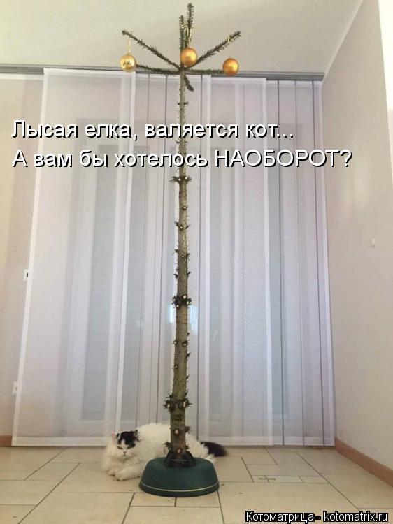 Котоматрица: Лысая елка, валяется кот... А вам бы хотелось НАОБОРОТ?
