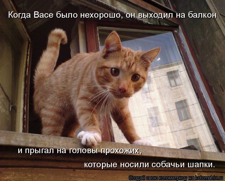 Котоматрица: Когда Васе было нехорошо, он выходил на балкон  и прыгал на головы прохожих,  которые носили собачьи шапки.