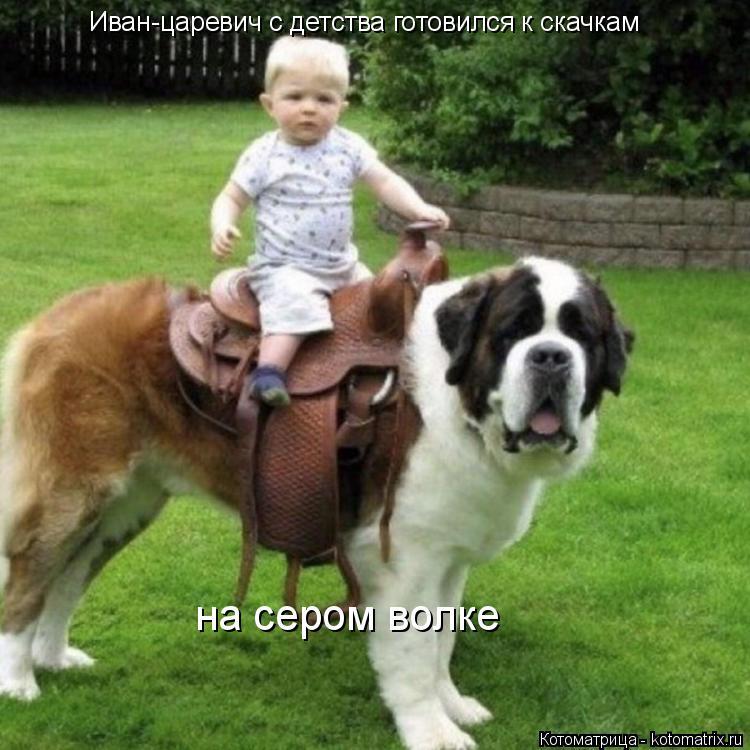 Котоматрица: Иван-царевич с детства готовился к скачкам  на сером волке