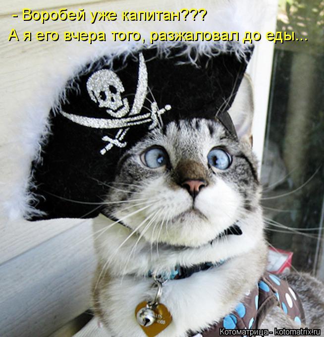 Котоматрица: - Воробей уже капитан??? А я его вчера того, разжаловал до еды...
