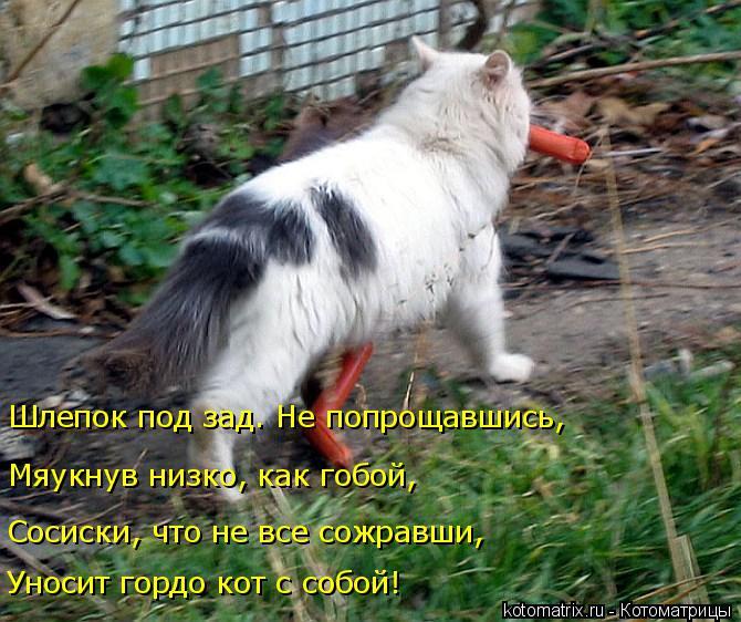 Котоматрица: Уносит гордо кот с собой! Сосиски, что не все сожравши, Мяукнув низко, как гобой, Шлепок под зад. Не попрощавшись,