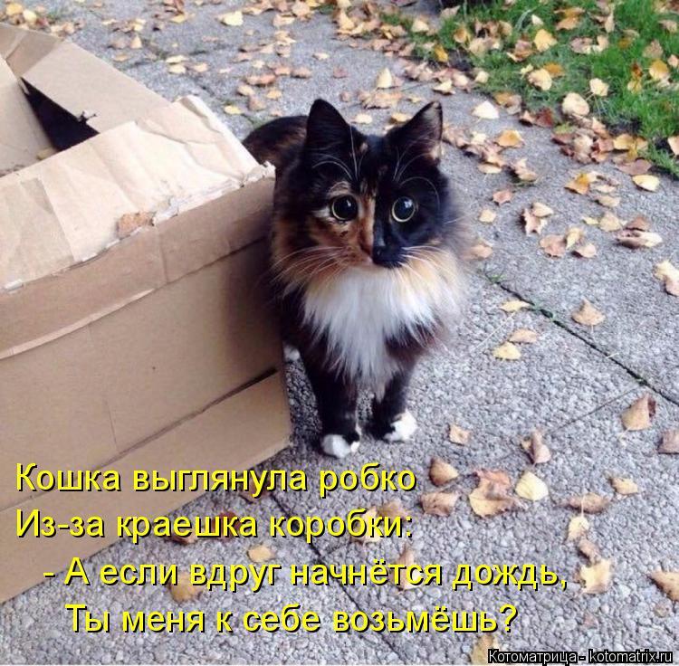 Котоматрица: Кошка выглянула робко Из-за краешка коробки: - А если вдруг начнётся дождь,  Ты меня к себе возьмёшь?