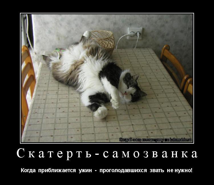 Котоматрица: Скатерть-самозванка Когда  приближается  ужин  -  проголодавшихся  звать  не нужно!