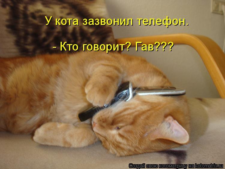 Котоматрица: У кота зазвонил телефон.  - Кто говорит? Гав???