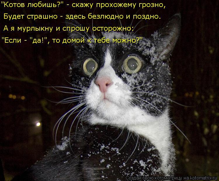 """Котоматрица: Будет страшно - здесь безлюдно и поздно. А я мурлыкну и спрошу осторожно: """"Котов любишь?"""" - скажу прохожему грозно, """"Если - """"да!"""", то домой к тебе"""