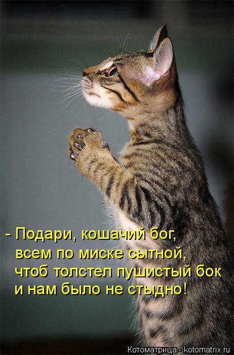 Котоматрица: - Подари, кошачий бог,  всем по миске сытной, чтоб толстел пушистый бок и нам было не стыдно!