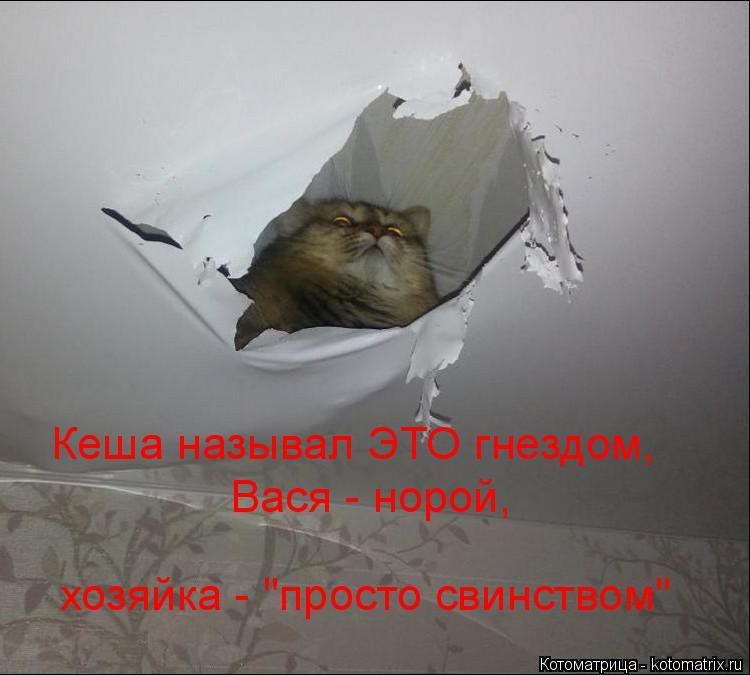 """Котоматрица: Кеша называл ЭТО гнездом, Вася - норой, хозяйка - """"просто свинством"""""""
