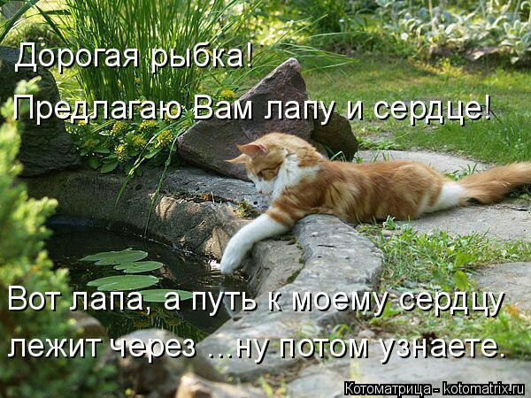 Котоматрица: Дорогая рыбка! Предлагаю Вам лапу и сердце! Вот лапа, а путь к моему сердцу лежит через ...ну потом узнаете.