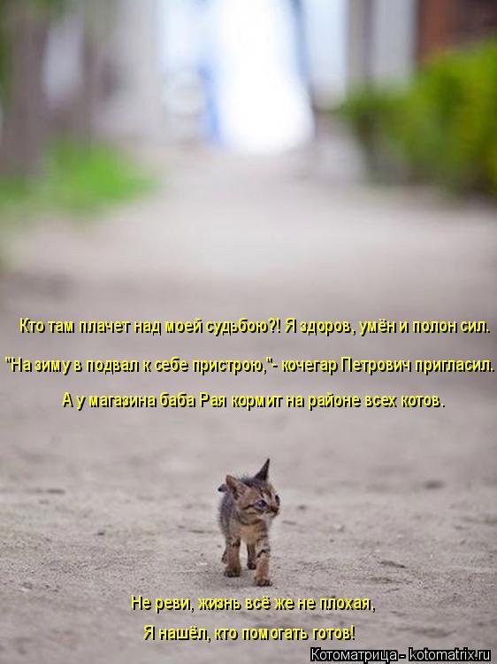 Котоматрица: А у магазина баба Рая кормит на районе всех котов. Кто там плачет над моей судьбою?! Я здоров, умён и полон сил. Не реви, жизнь всё же не плохая,