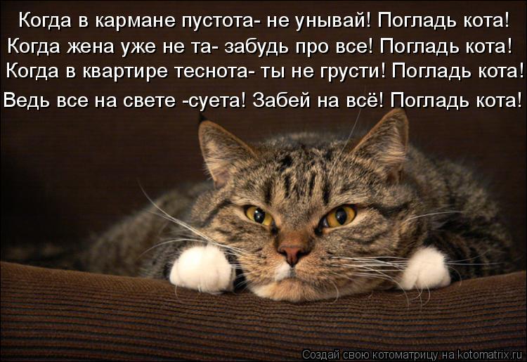Котоматрица: Когда в кармане пустота- не унывай! Погладь кота! Когда в квартире теснота- ты не грусти! Погладь кота! Когда жена уже не та- забудь про все! По