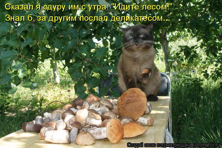 """Котоматрица: Сказал я сдуру им с утра: """"Идите лесом!"""" Знал б, за другим послал деликатесом..."""