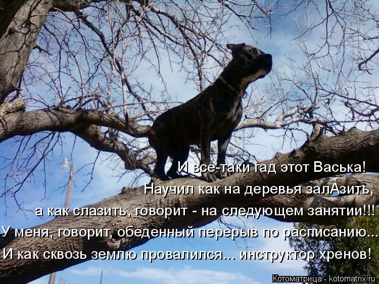 Котоматрица: И все-таки гад этот Васька!  Научил как на деревья залАзить, а как слазить, говорит - на следующем занятии!!! У меня, говорит, обеденный перерыв