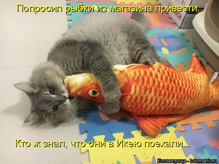 Котоматрица: Попросил рыбки из магазина привезти.  Кто ж знал, что они в Икею поехали...