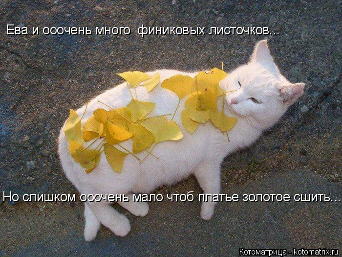 Котоматрица: Ева и ооочень много  финиковых листочков... Но слишком ооочень мало чтоб платье золотое сшить....