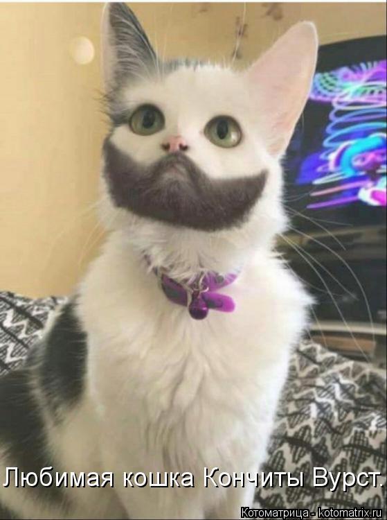 Котоматрица: Любимая кошка Кончиты Вурст.