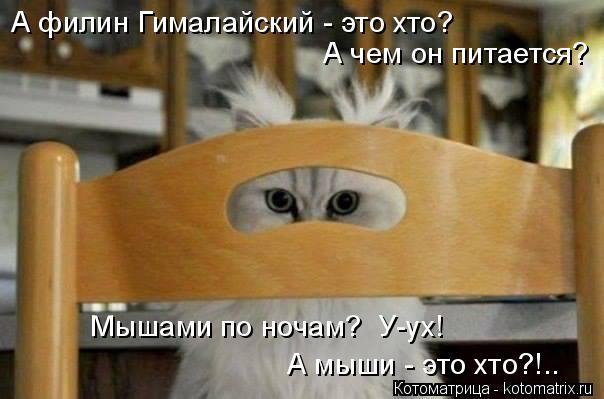 Котоматрица: А филин Гималайский - это хто? А чем он питается? Мышами по ночам?  У-ух! А мыши - это хто?!..