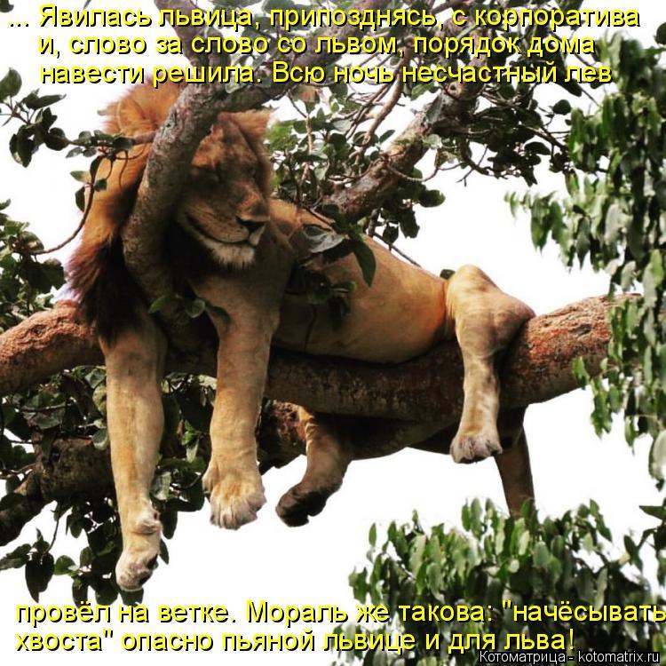 Котоматрица: ... Явилась львица, припозднясь, с корпоратива  и, слово за слово со львом, порядок дома навести решила. Всю ночь несчастный лев  провёл на вет