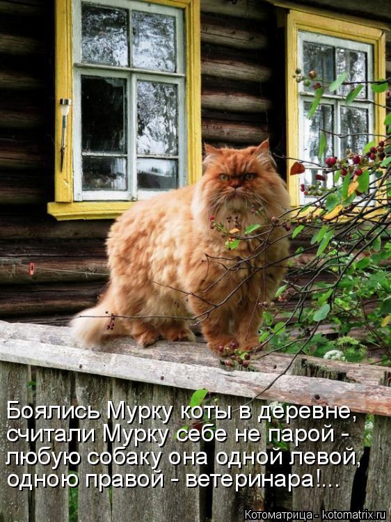 Котоматрица: Боялись Мурку коты в деревне, считали Мурку себе не парой - любую собаку она одной левой, одною правой - ветеринара!...