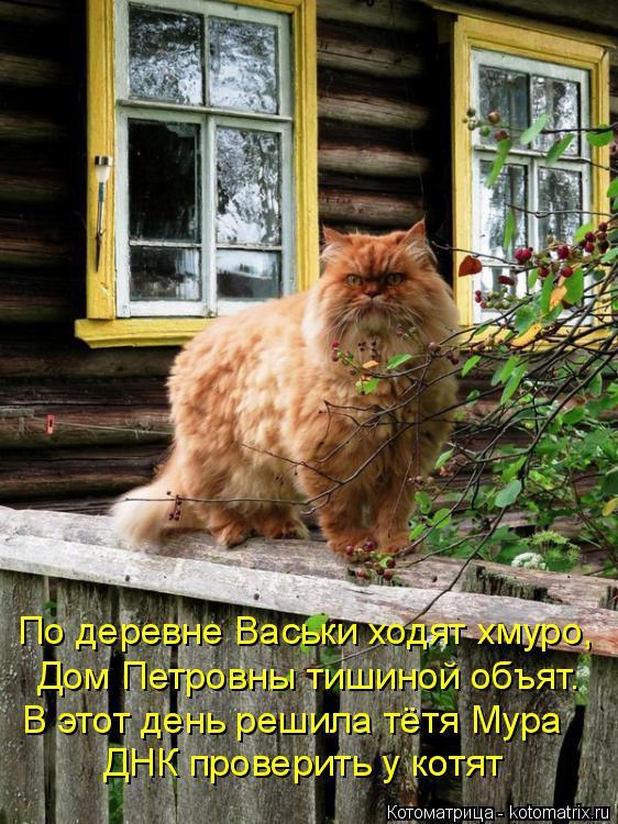 Котоматрица: ДНК проверить у котят В этот день решила тётя Мура Дом Петровны тишиной объят. По деревне Васьки ходят хмуро,