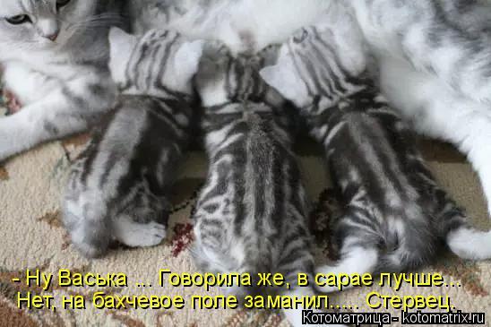 Котоматрица: - Ну Васька ... Говорила же, в сарае лучше... Нет, на бахчевое поле заманил..... Стервец.
