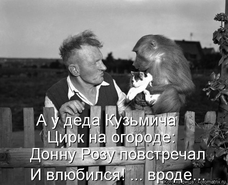 Котоматрица: А у деда Кузьмича Цирк на огороде: Донну Розу повстречал И влюбился! ... вроде...