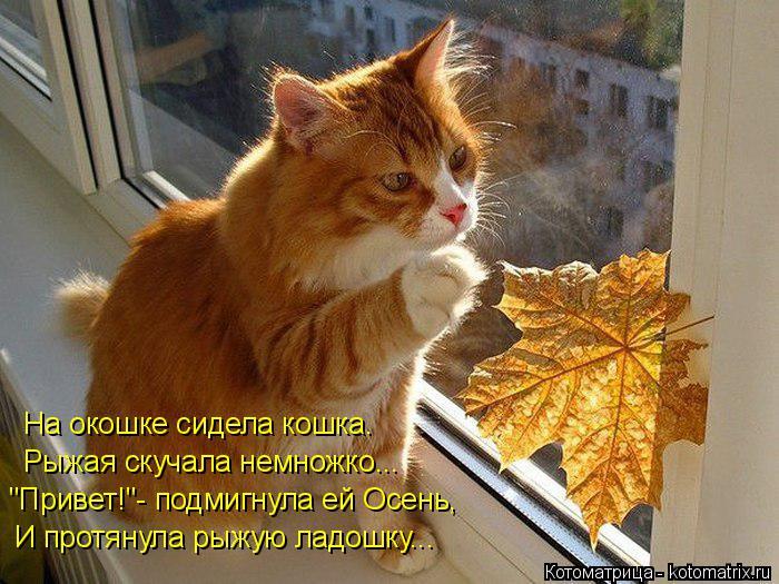 """Котоматрица: На окошке сидела кошка. Рыжая скучала немножко... """"Привет!""""- подмигнула ей Осень, И протянула рыжую ладошку..."""