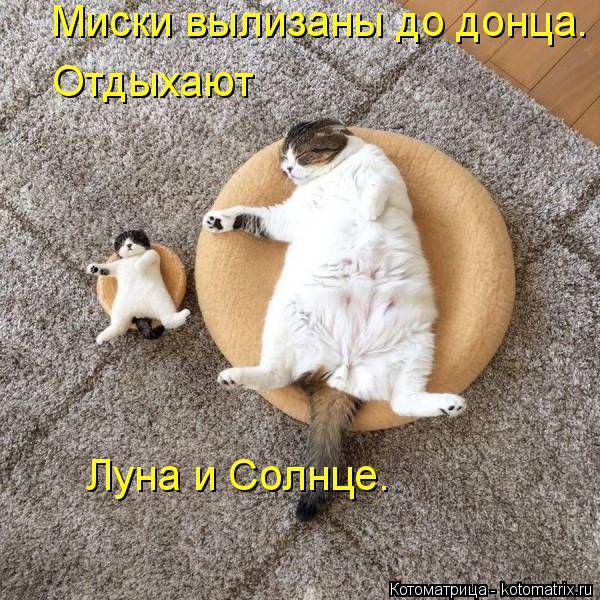 Котоматрица: Миски вылизаны до донца. Отдыхают Луна и Солнце.