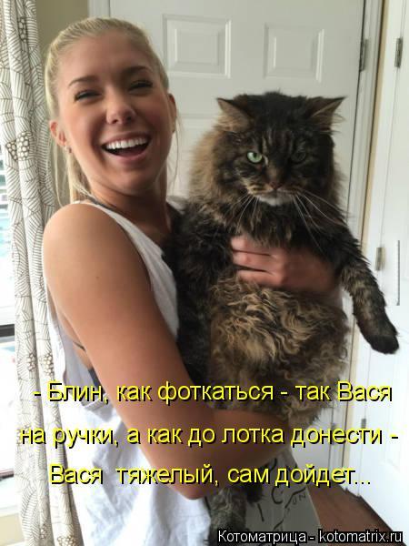 Котоматрица: - Блин, как фоткаться - так Вася  на ручки, а как до лотка донести - Вася  тяжелый, сам дойдет...