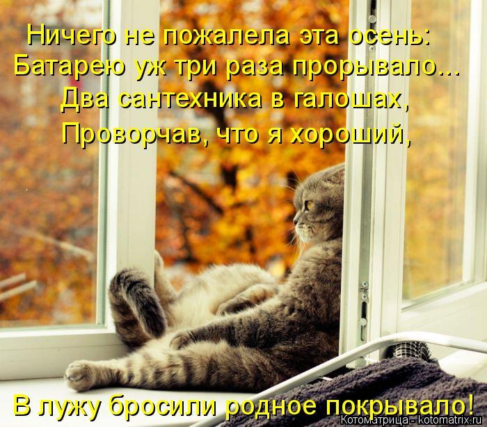 Котоматрица: Ничего не пожалела эта осень: Батарею уж три раза прорывало... Два сантехника в галошах, Проворчав, что я хороший, В лужу бросили родное покры