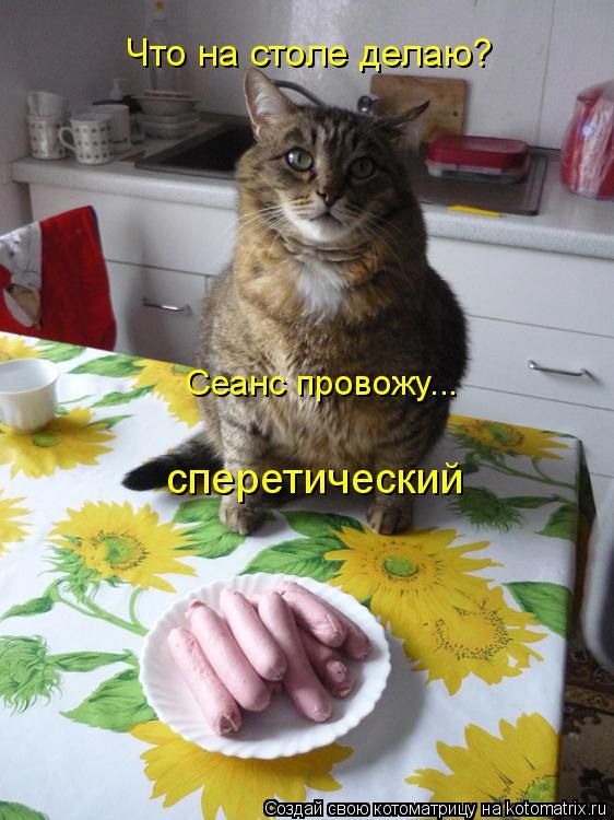 Котоматрица: Что на столе делаю? Сеанс провожу... сперетический